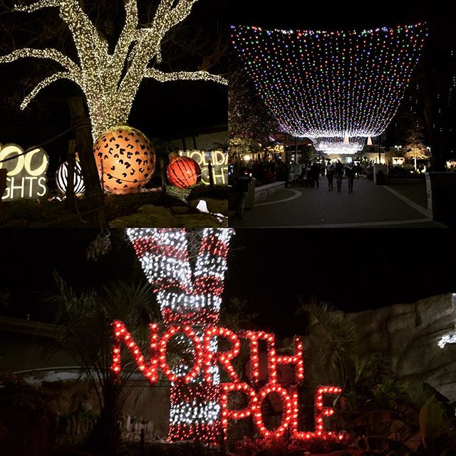 Christmas lights at the San Antonio Zoo
