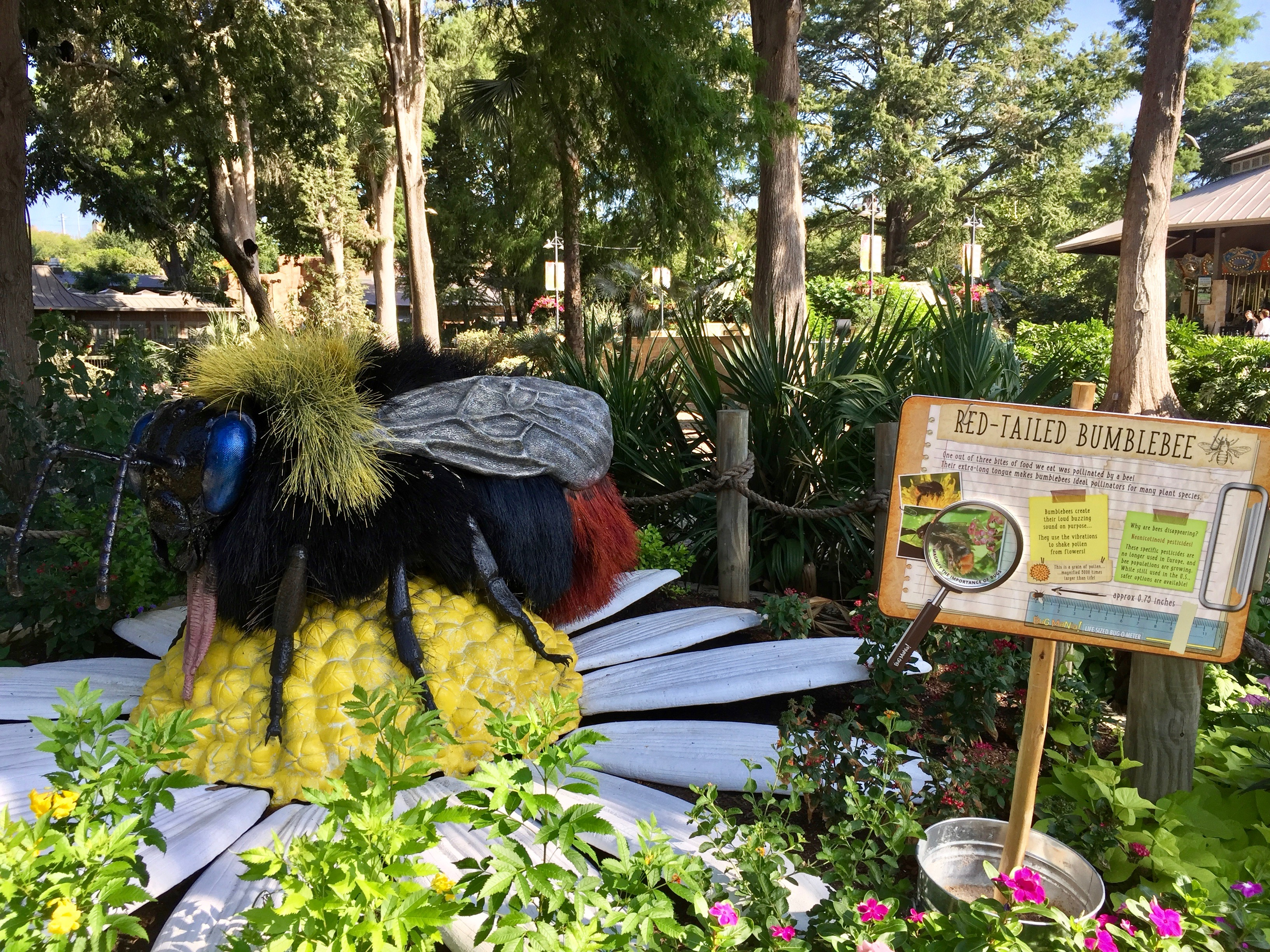 San Antonio Zoo Bug Mania